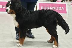 24 november 2019: Dogachtigenshow 1ste Veelbelovend