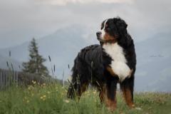 Oostenrijk, 21 juni 2020: fotosessie door fokster Anika
