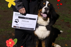 7 november 2019: puppydiploma, vrouwtje is trots! :-)